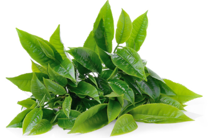 green-tea-leaves.png