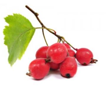 hawhorne-berries.png