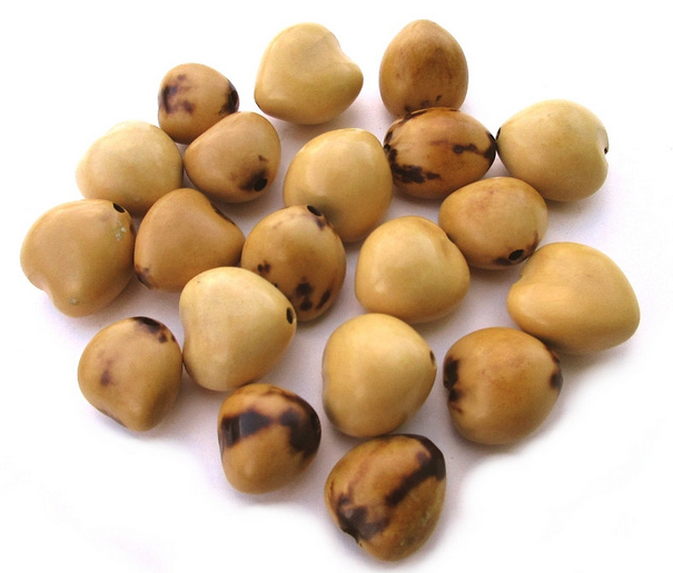 kukui-nuts.png
