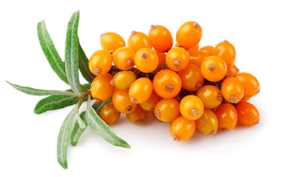sea-buckthorn.png