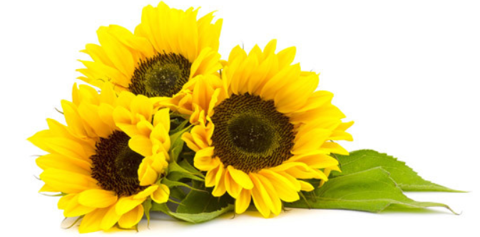 sun-flowers.png