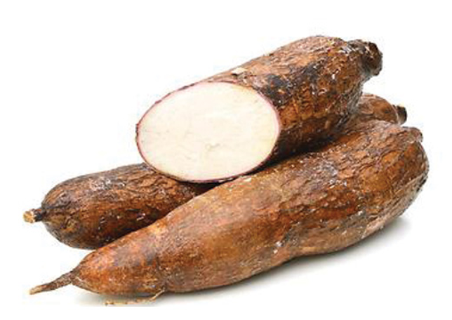 yucca-root.png